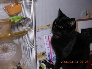 当時うちにいたハムスターは気が強くて、猫たちを恐怖のどん底に叩き込んでいた!