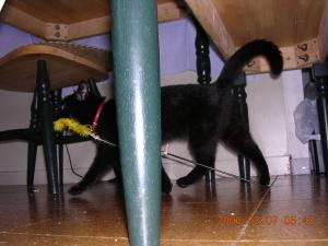 いつも猫じゃらしを持って移動。大のお気に入りだったけど、壊れちゃった。こっちに来たら、新しいの買おう!