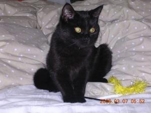 最初緊張で先住猫を寄せ付けなかった「あず」だったけれど、猫じゃらしで遊んでいるうちに忘れてしまっていた。